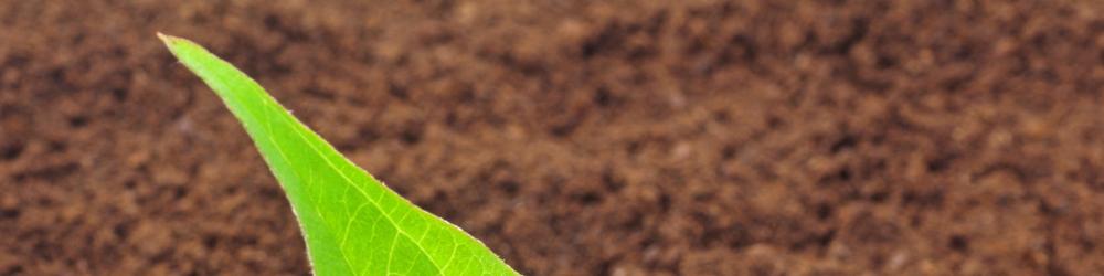 Environmental Analysis - Soil Analysis - terra